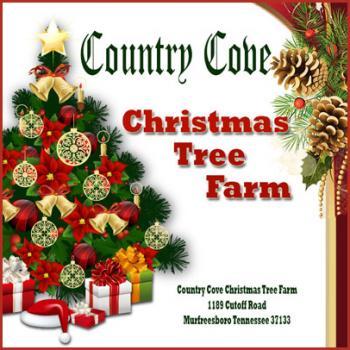 country cove christmas tree farm nashvillelifecom - Country Cove Christmas Tree Farm