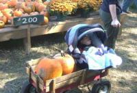 Kids Love Walden Pumpkin Farm