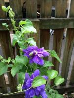Perennial Plants for Your Garden