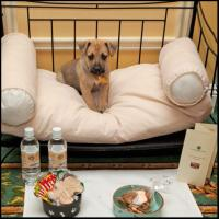 Pampered Pets At The Hermitage Hotel In Nashville Pet Friendly Hotels