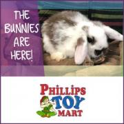 The Bunnies Are Here at Phillips Toy Mart