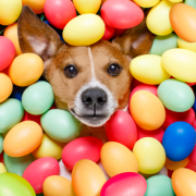 GoodDog Festival and Doggie Egg Hunt