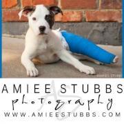Amiee Stubbs Photography