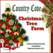Country Cove Christmas Tree Farm in Mufreesboro Tennessee