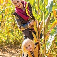 Corn Maze, Lucky Ladd Farms, Nashville, Murfreesboro, Franklin, Middle Tennessee