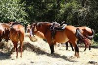 Horseback riding at Juro Stables in Mt Juliet Tennessee