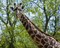 Animals at Nashville Zoo at Grassmere