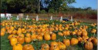Shuckle's Corn Maze & Pumpkin Patch