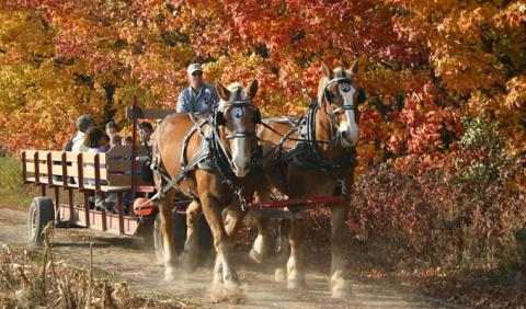 Enjoying a beautiful fall day on the Best Fall Hayrides in Nashville Tennessee