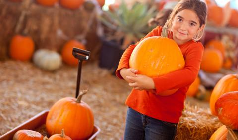 Little Girl with a pumpkin at a Nashville Festival