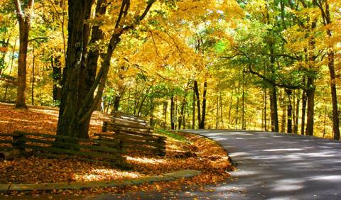 Nashville Fall Colors