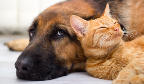 Dog and kitty available for adoptions in Nashville and Middle Tennessee