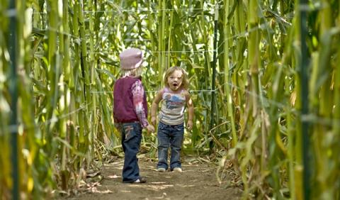 Kids playing in a corn maze in Nashville Tennessee