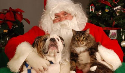 Nashville Pet Photos with Santa