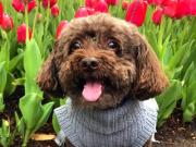 Dogs and Dogwoods