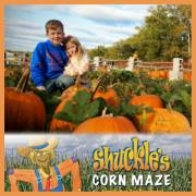Shuckle's Corn Maze & Pumpkin Patch